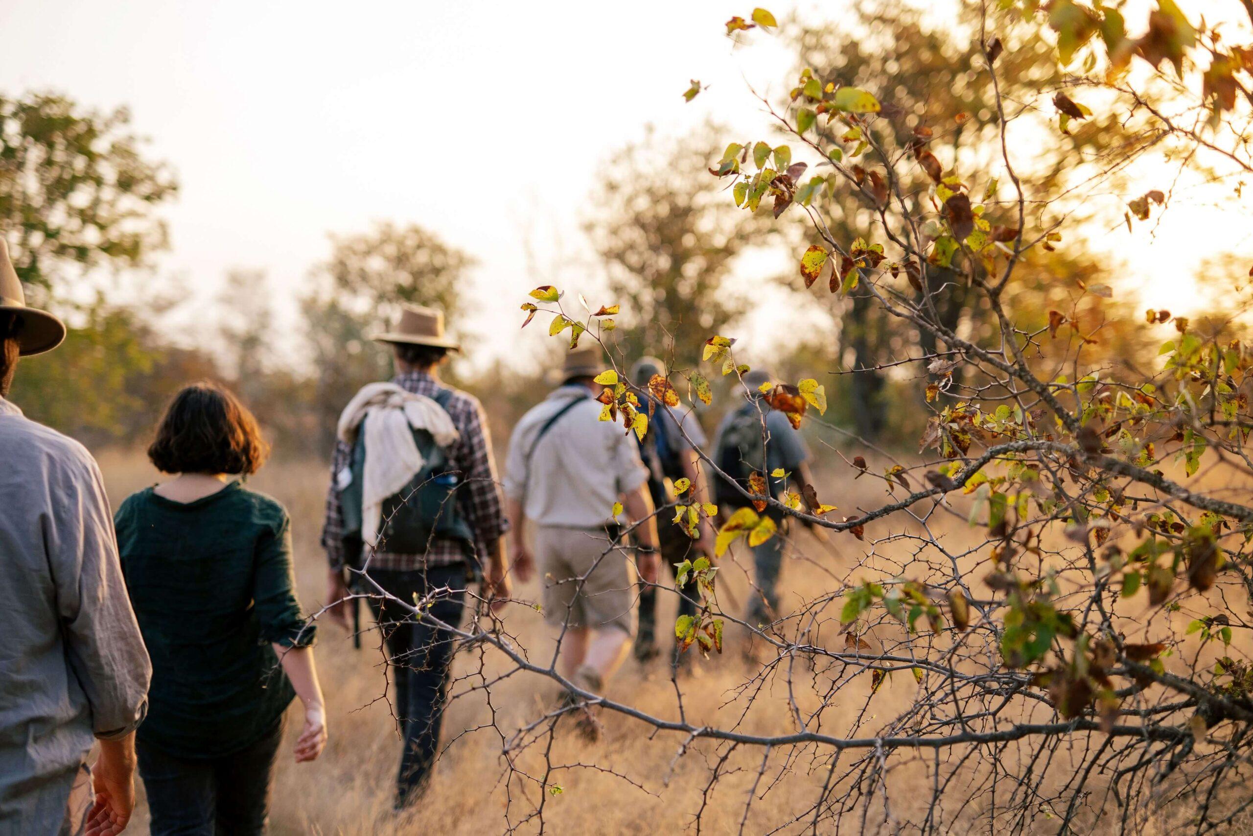 Simbavati Trails camp - walking safari & guiding
