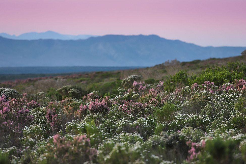 Protea farm visit - landscape