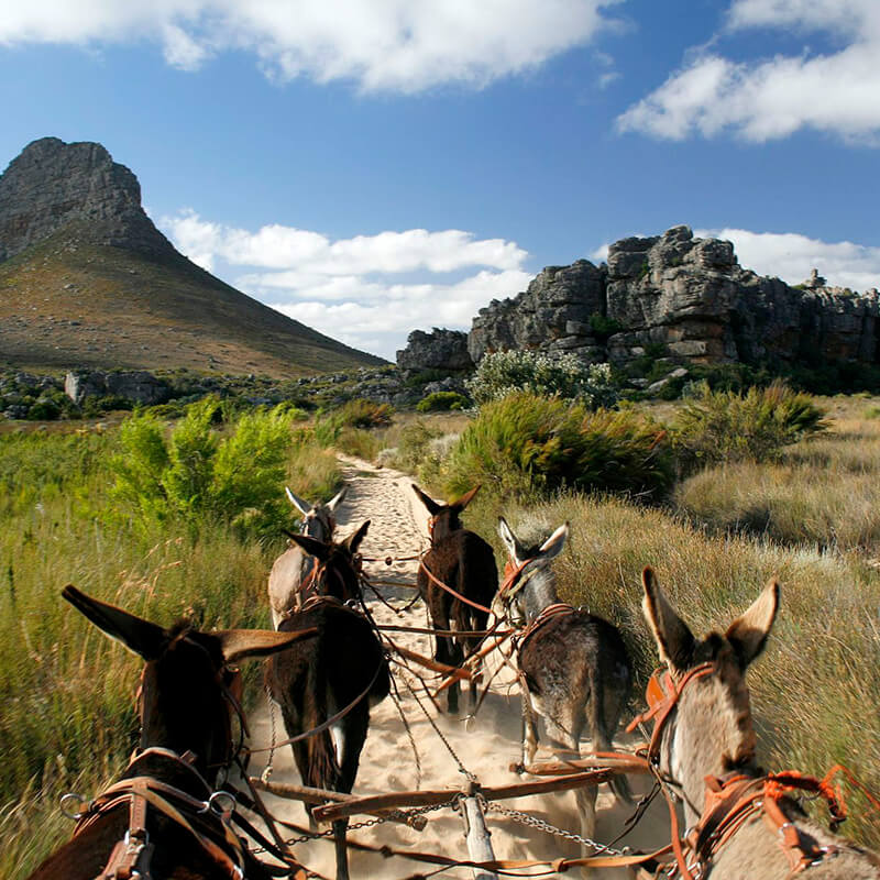 Cederberg Mountains - donkey cart on heritage trail